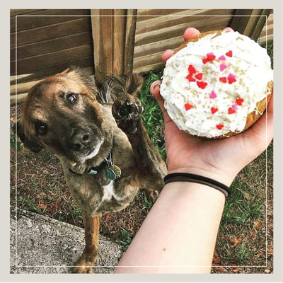 A dog waits eagerly for a pupcake - a cupcake especially for dogs, made with dog safe ingredients - at Cupcake DownSouth in Charleston SC and Columbia SC